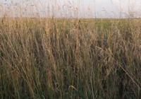 empowering grasslands pix 3