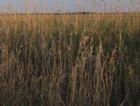 empowering grasslands pix 4