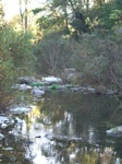 tranquil river pix 12