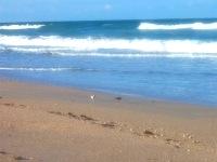 tranquil beach pix 5