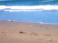 tranquil beach pix 6