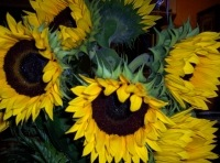 empowering wildflowers pix 2