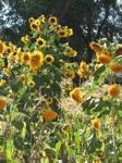empowering wildflowers pix 7