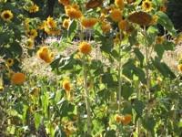 empowering wildflowers pix 4