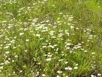 empowering wildflowers pix 5