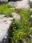 empowering wildflowers pix 8