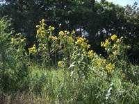 empowering wildflowers pix 1