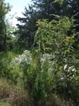 empowering wildflowers pix 9