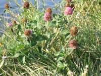 empowering wildflowers pix 3
