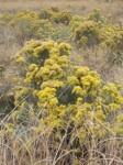 empowering wildflowers pix 10